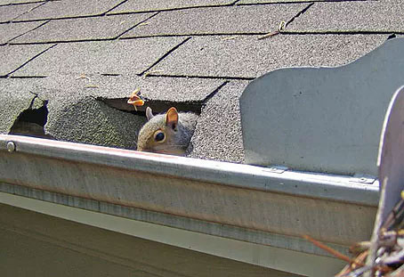 Gutter Protection from Insects/Rodents